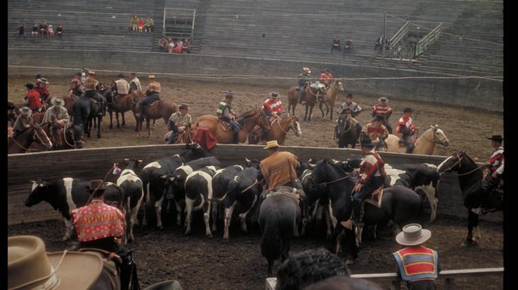 Rodeo en Parque Saval de Valdivia, 1964.