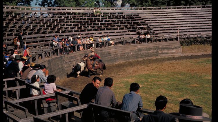 Rodeo, Parque Saval, Valdivia 1964.