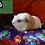 Thumbnail: Super Square Cushion