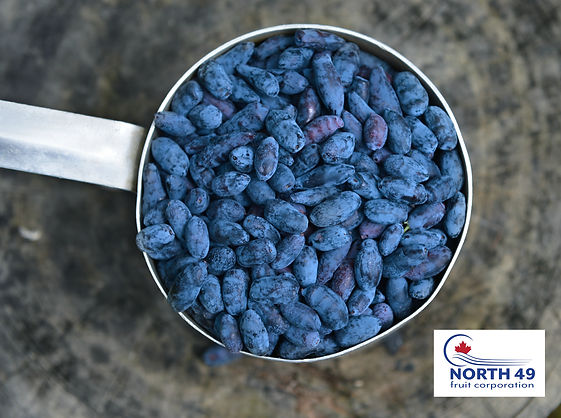 North 49 Fruit Corp haskap berries