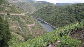 Galicia: Variedades autorizadas en la Ribeira Sacra