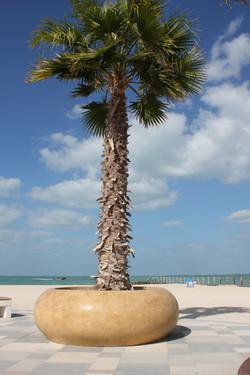 Planter, Jumeirah Beach
