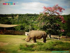 rinoceronte con arbol con flores hermosa