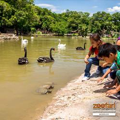 Zoofari_con_niños_en_el_lago_hermosa_fo