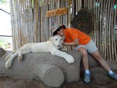 Margarita con tigre blanca  presiosa fot