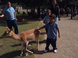 niño_con_antilope.jpg
