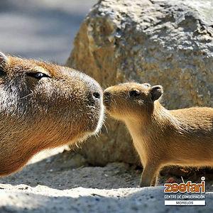 amor-Zoofari.jpg