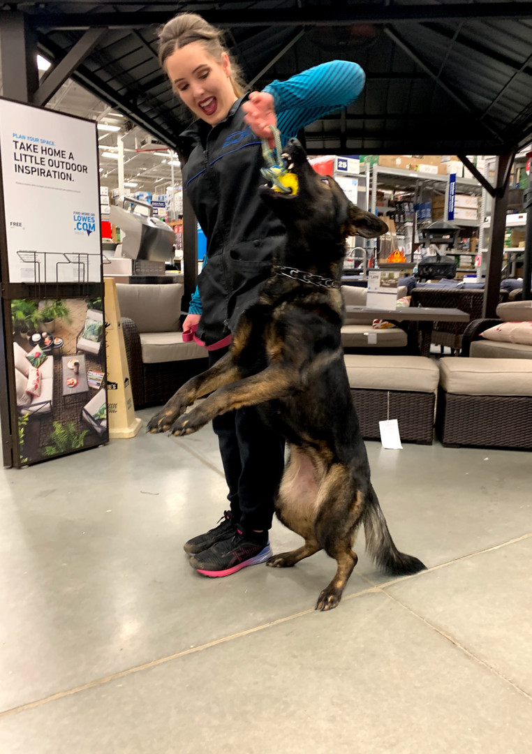 IGP/Shutzhund Trainer, Megan Clouse, & Road Warrior Empress BH, CGC, TKN, TKI