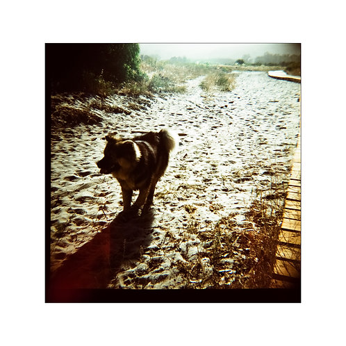 Dog, analog photo,  original art collection, Robo Melo, photographer, online gallery and store