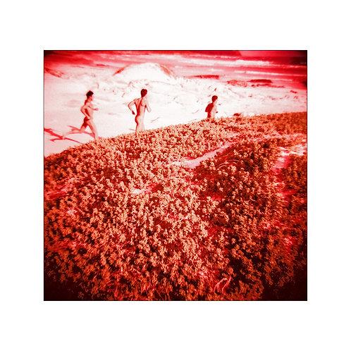 Dunes 1 - 3, Belami porn models, original analog art photo for sale. Photography Artwork by Robo Melo online gallery store