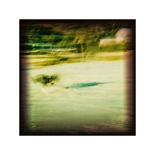 Dog, analog pinhole photography artwork by Robo Melo, Belami photographer, online gallery and store