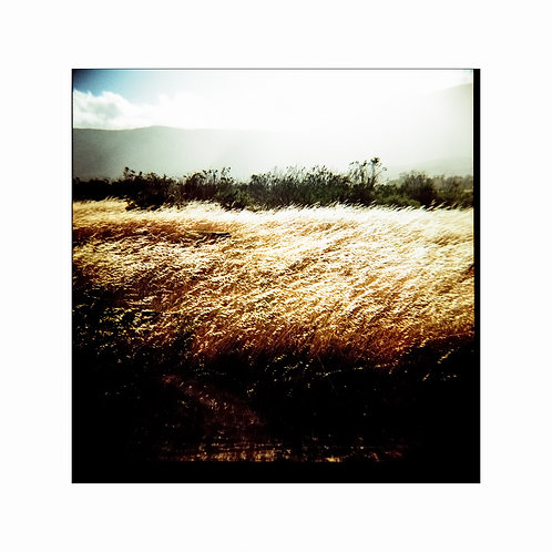 Meadow, analog photo,  original artcollection, Robo Melo, photographer, online gallery and store