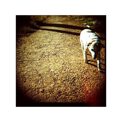 Dog 2, analog photo,  original art collection, Robo Melo, photographer, online gallery and store