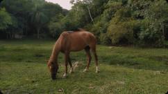 um_cavalo_olhou_pro_ceu_com_esperancas_d