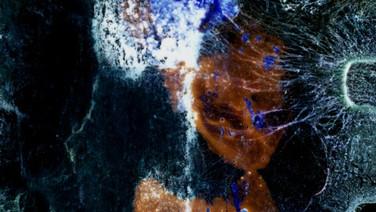 O ÚLTIMO DIA DA MARIPOSA  (Le dernier jour du papillon lune)  Guillaume Vallée, Canadá, 2019, 5 min.  Uma mariposa está morrendo sob os olhos de uma criança. Do ponto de vista do inseto, ouvimos a criança se maravilhar com a morte, post-mortem e efêmera, na forma de um monólogo inspirado em Cioran.  DATAS E HORÁRIOS DE EXIBIÇÃO - CINEMATECA DO MAM 16/07 - 17/10 21/07 - 13H  SESC MADUREIRA 28/07 - 15H