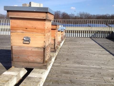 Bienenstöcke im Sommer