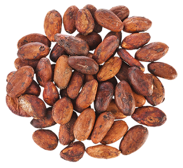cacao 1.png