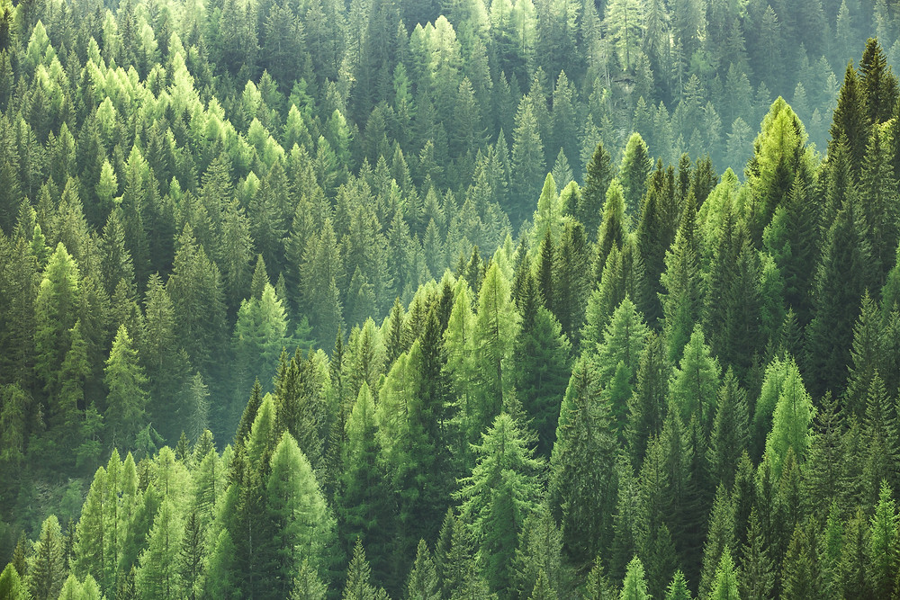 A sustainable forest