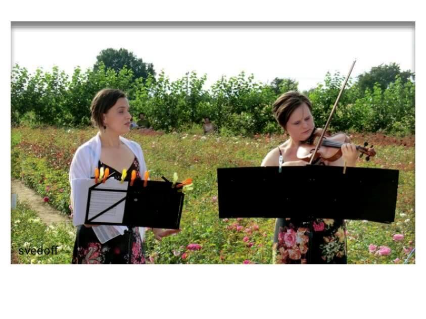 Zpěv a housle v růžích