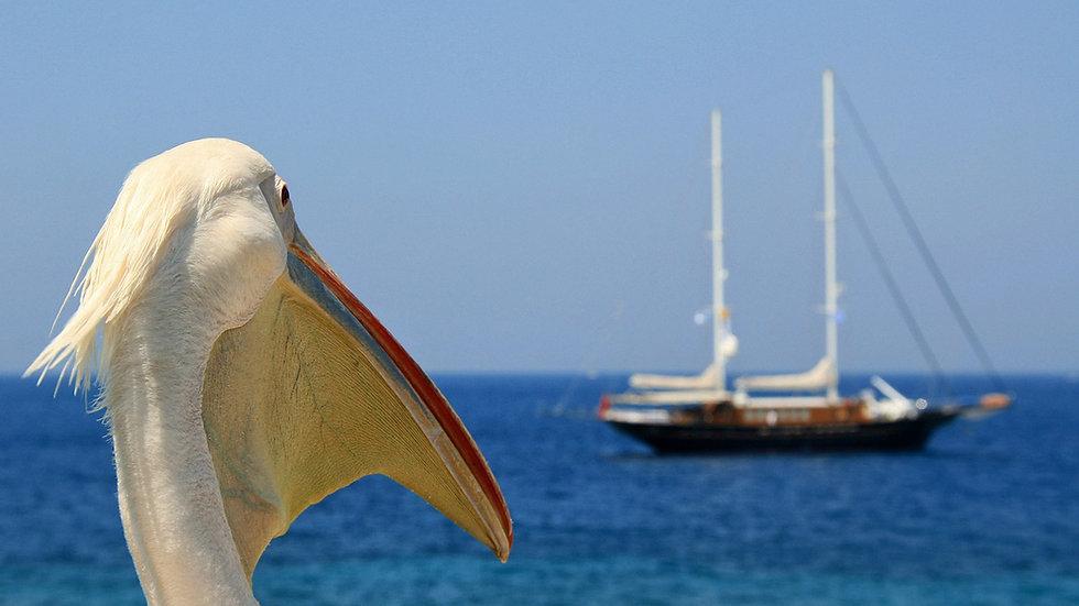 pelican-4260045_1920_edited.jpg