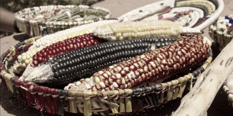 Hopi Blue Corn