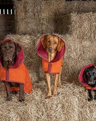 Three_Wise_Dogs_540x.jpg