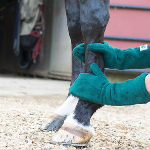 mitts-on-horse_a6596672-ccca-48c9-9eaf-1