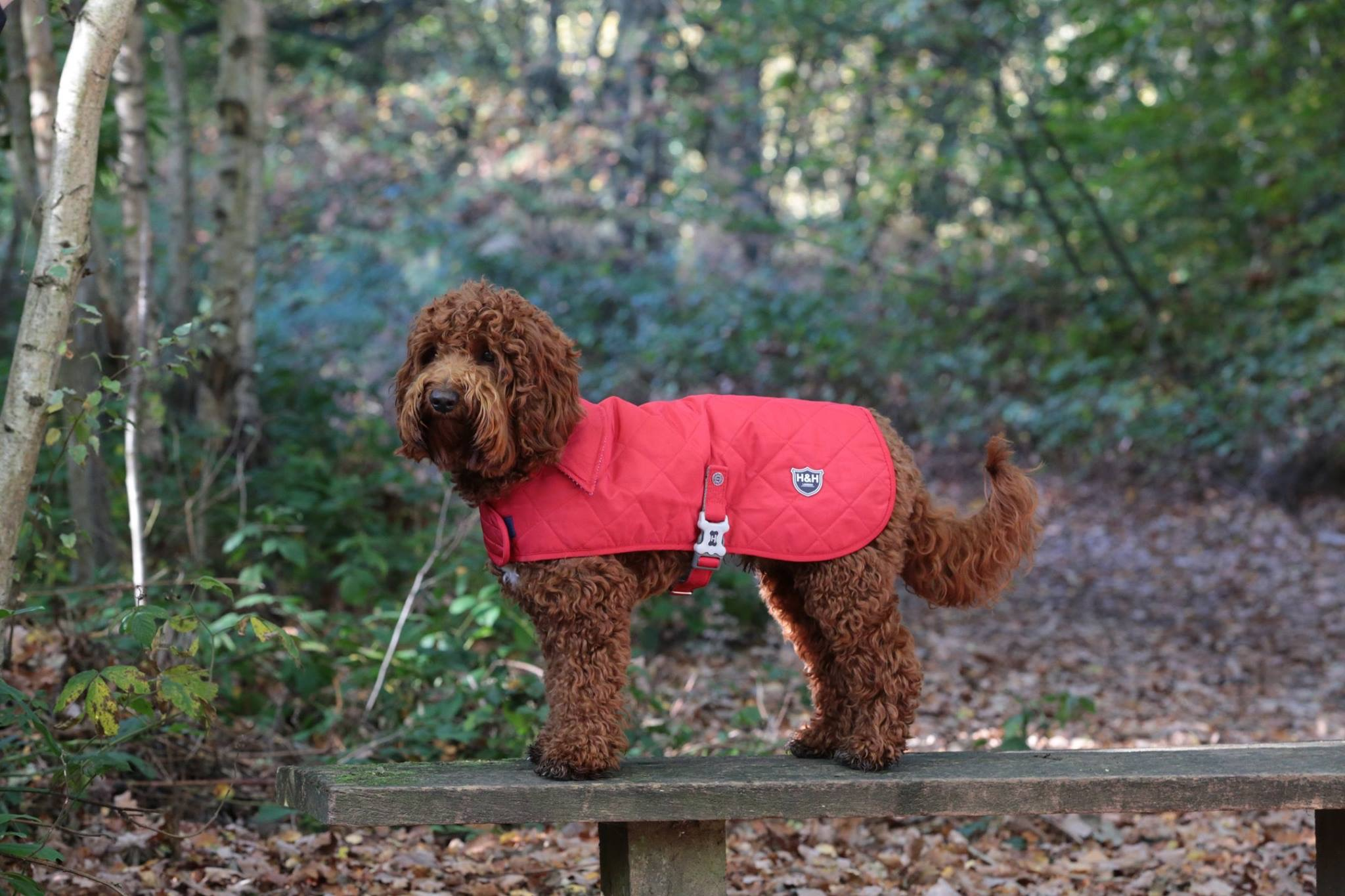 Posh Dog Coats