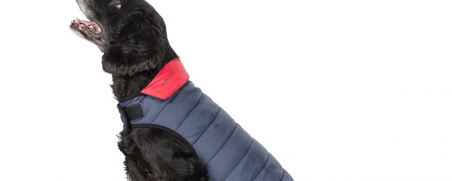 Kimmi  Dog Coats
