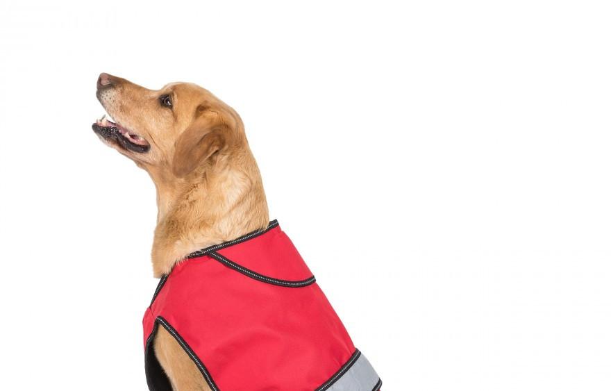 Duke Dog Coats
