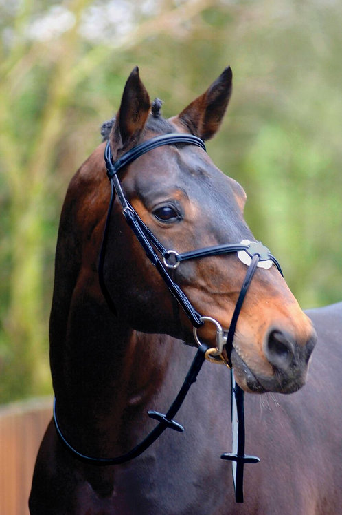 CALDENE BRIDLE GRACKLE PADDED WITH REINS