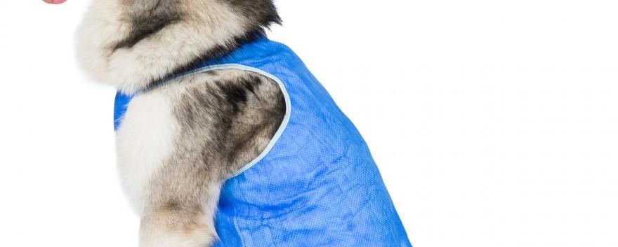Alaska Dog Cooling Coat
