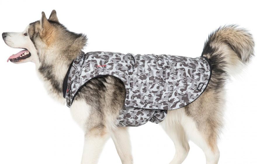 Charley Dog Coat