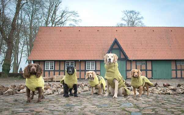 Siccaro-Hunting-Dogs-1080x675.jpg
