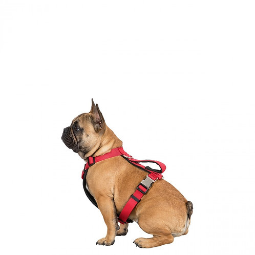 Tanked S/M Reflective Dog Harness
