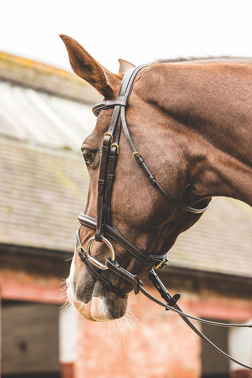 MARK TODD BRIDLE PERFORMANCE FLASH WITH BRASS FITTING