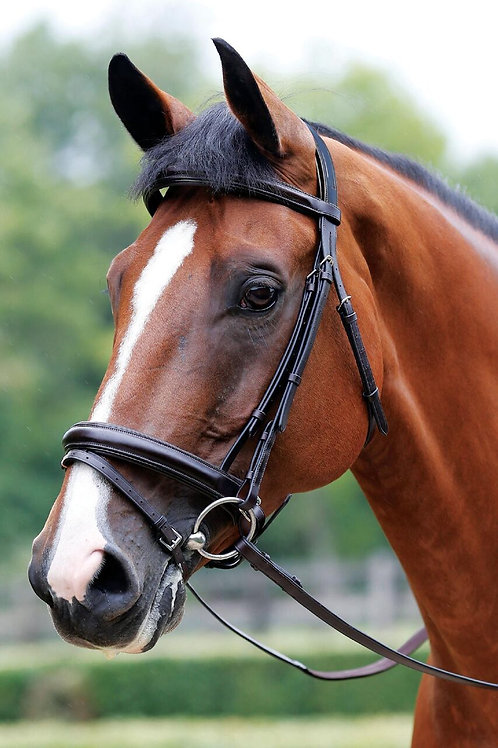 MARK TODD BRIDLE PERFORMANCE FLASH PATENT PIPED