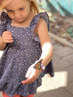 butterfly visit.jpg