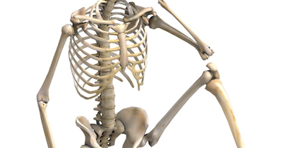 Ri-Immaginiamo il nostro Corpo: per far chiarezza sul mal di Schiena