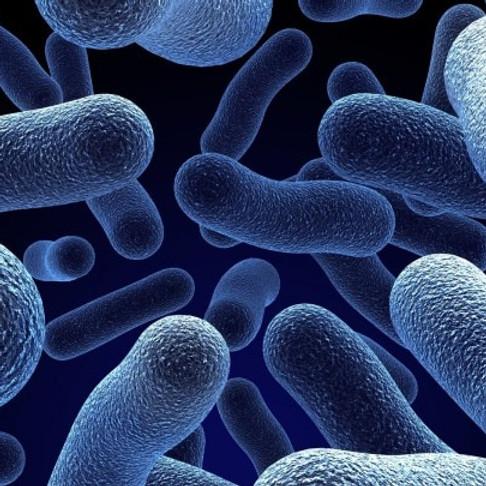 Microrganismi effettivi. Cosa sono?