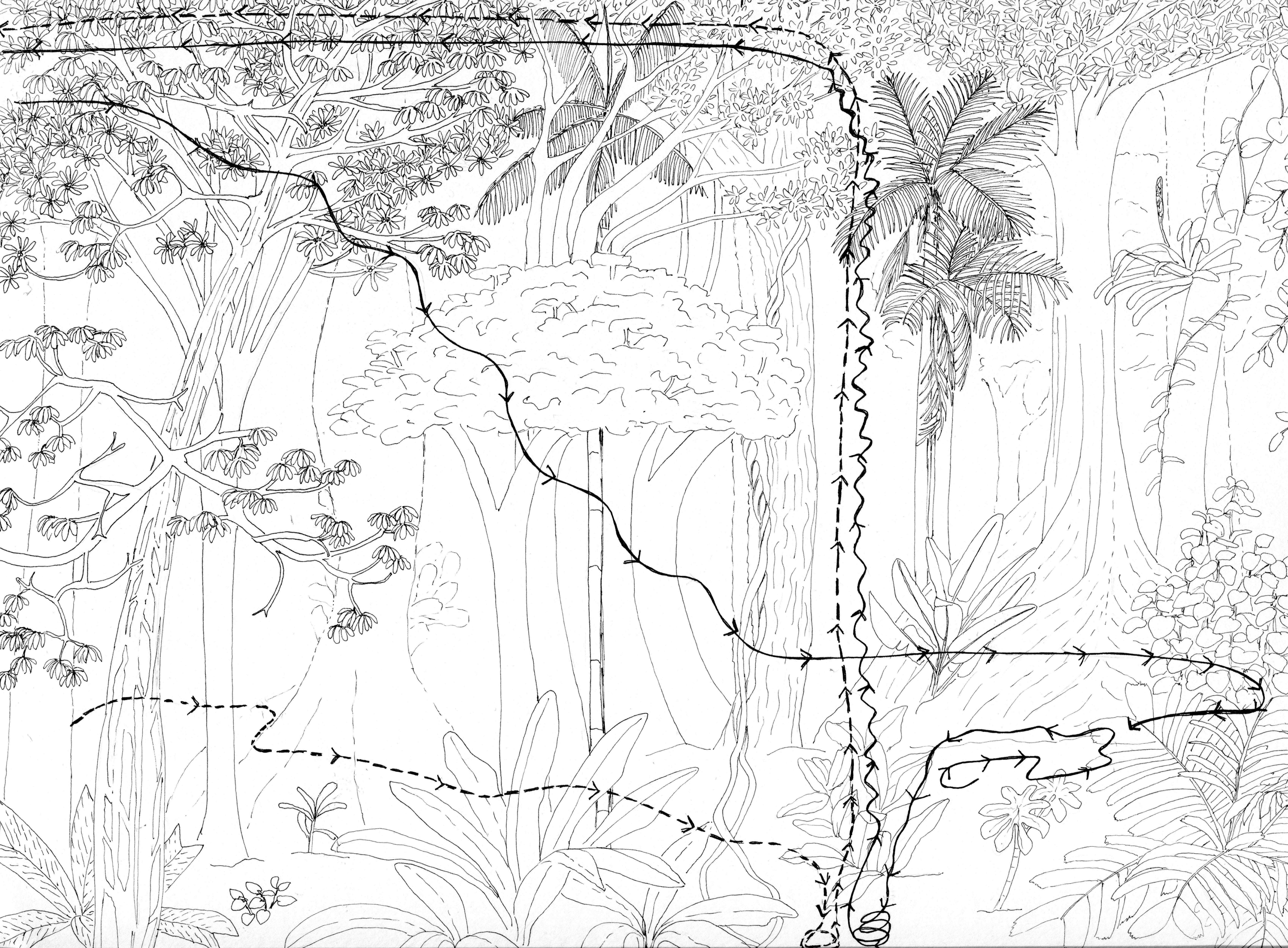 Heliconius path011