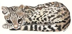 Leopardus tigrinus