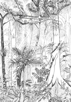 Tropical forest and epiphytes big no Megan
