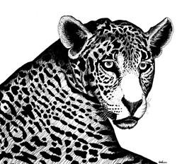 jaguar Camila