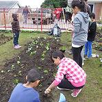 Kelston Community garden group