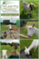Collage 2019-07-06 22_44_06.jpg