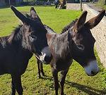 Donkey Gareth Lawrence.jpeg