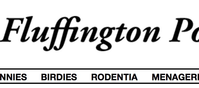 Fluffington Post