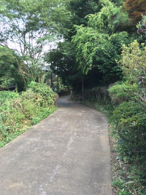 hachimitu Avenue(はちみつ通り)