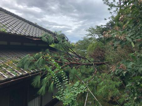 台風15号がやってきた💨!